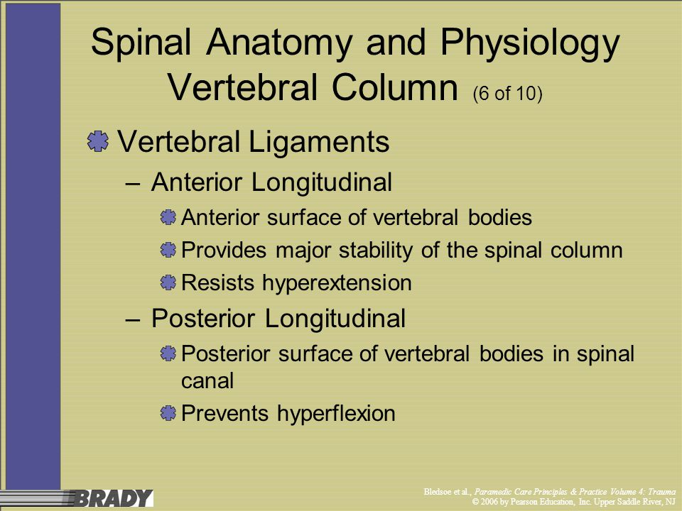 Spinal Anatomy and Physiology Vertebral Column (6 of 10)