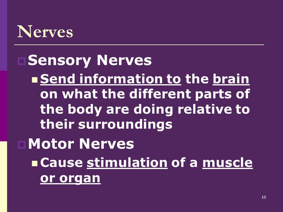 Nerves Sensory Nerves Motor Nerves
