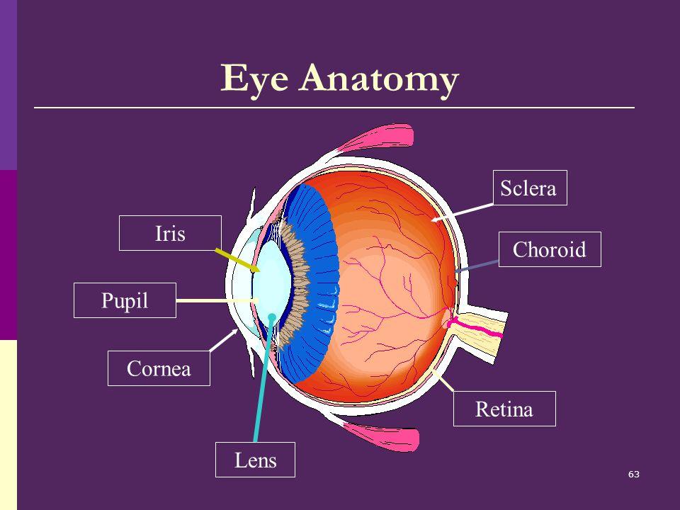 Eye Anatomy Sclera Iris Choroid Pupil Lens Cornea Retina