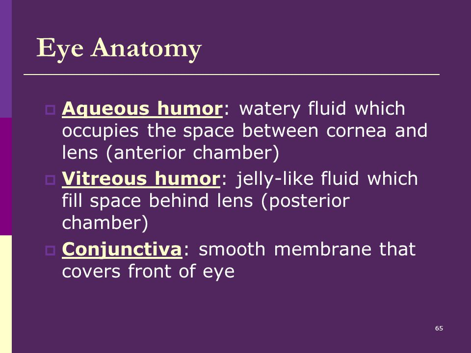 Eye Anatomy Aqueous humor: watery fluid which occupies the space between cornea and lens (anterior chamber)