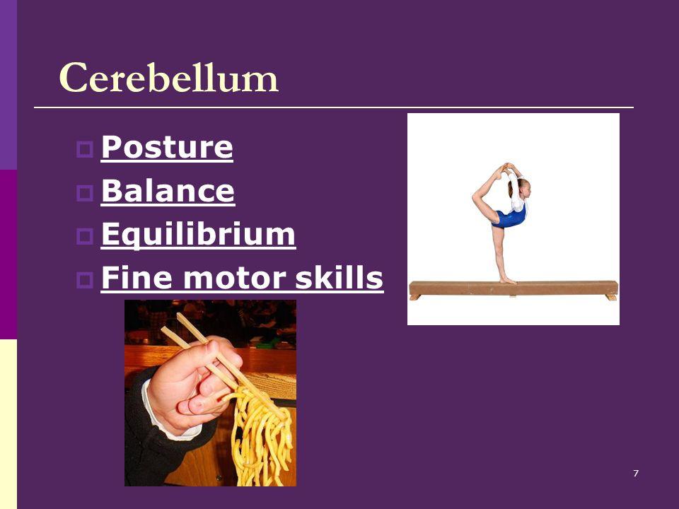 Cerebellum Posture Balance Equilibrium Fine motor skills
