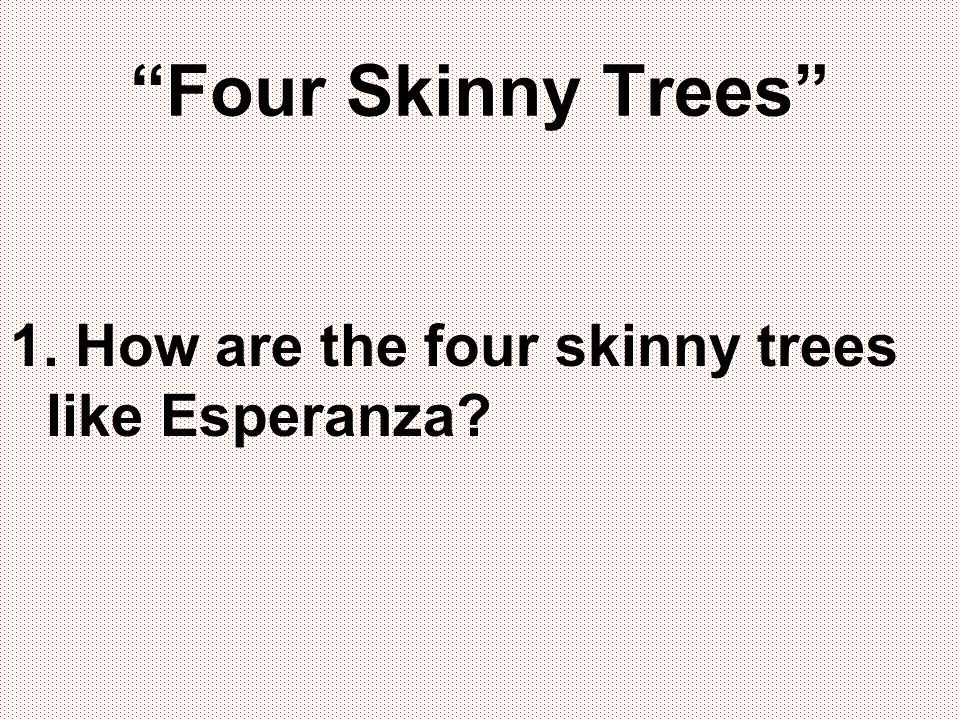 Four Skinny Trees 1. How are the four skinny trees like Esperanza