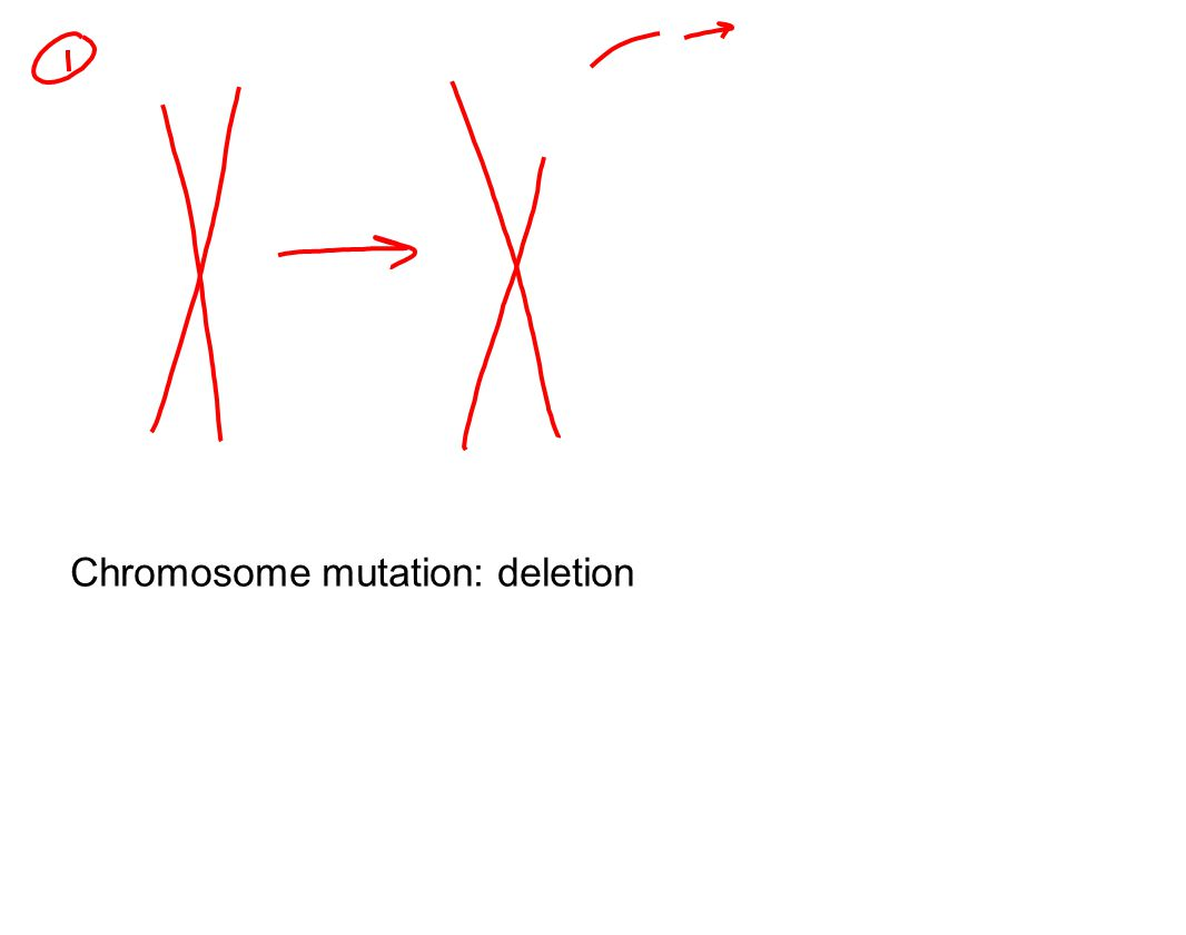 Chromosome mutation: deletion