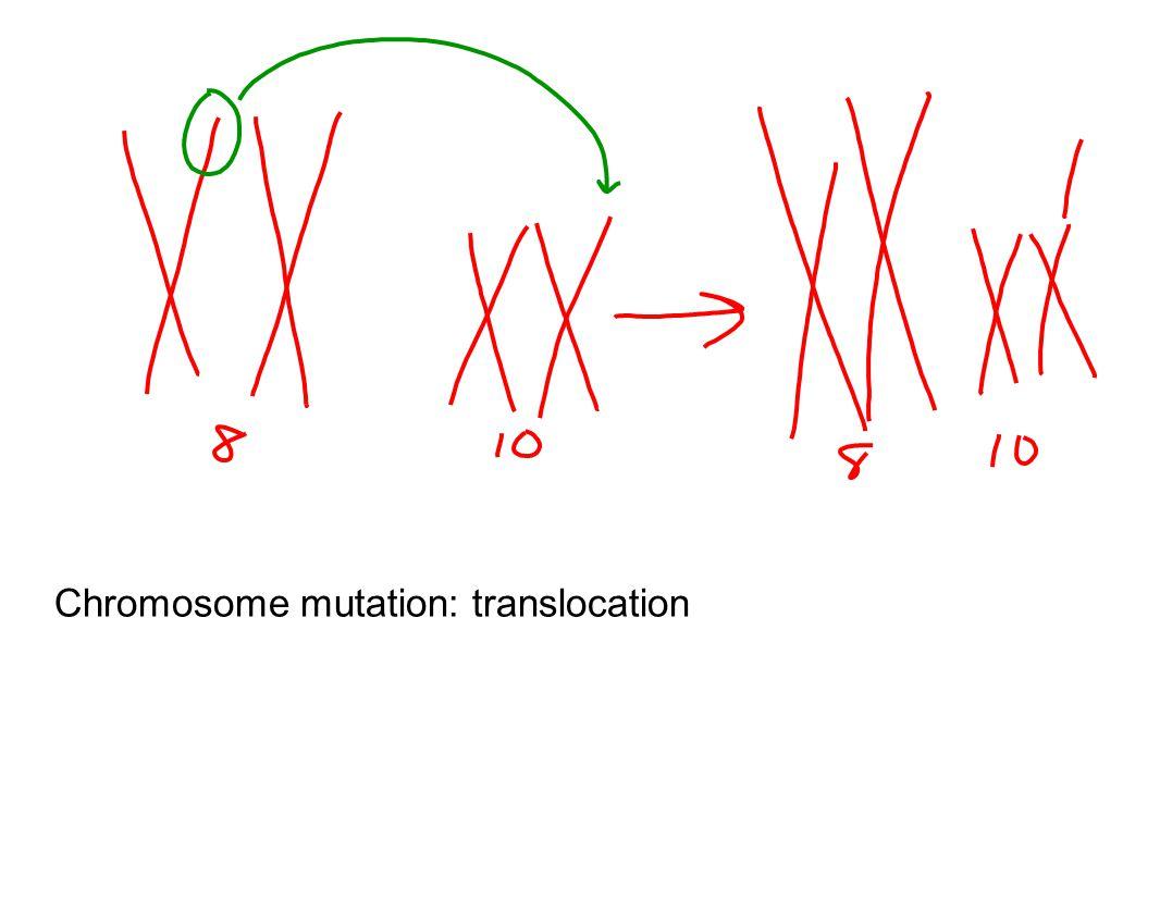 Chromosome mutation: translocation