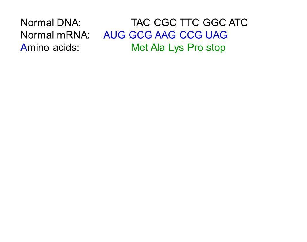 Normal DNA: TAC CGC TTC GGC ATC