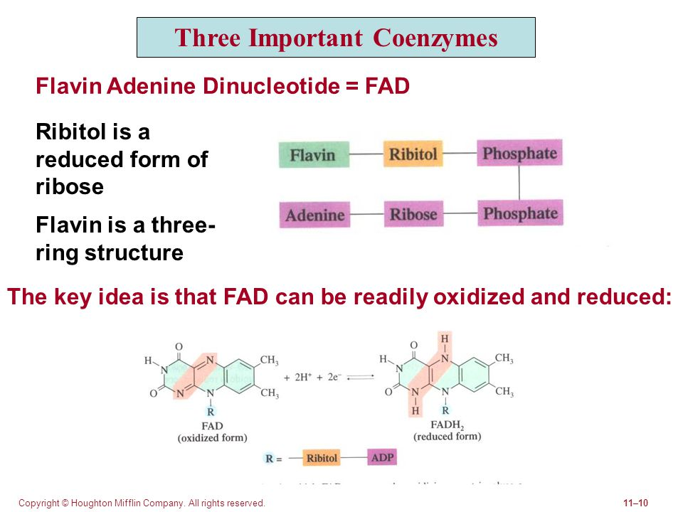 Three Important Coenzymes