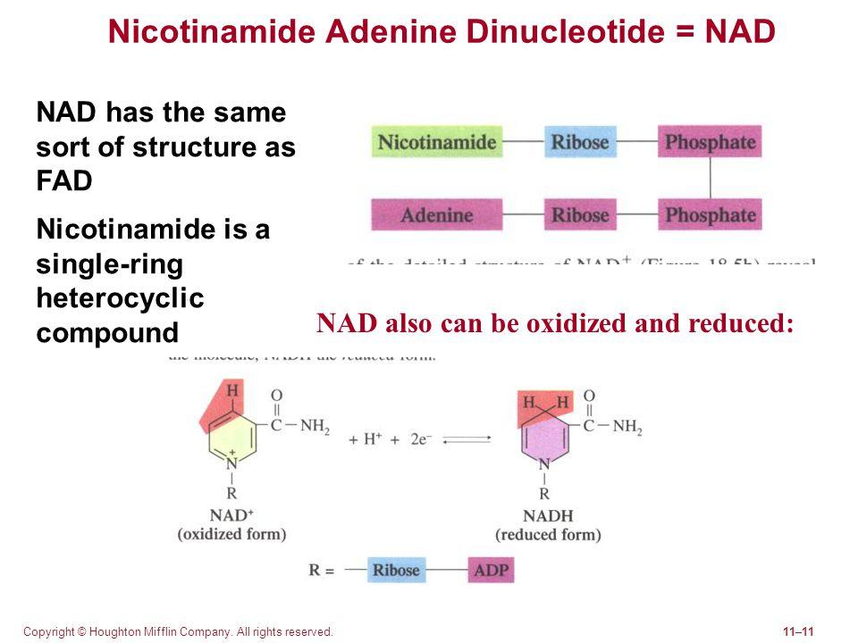 Nicotinamide Adenine Dinucleotide = NAD