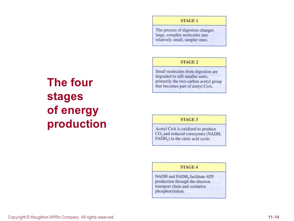 The four stages of energy production