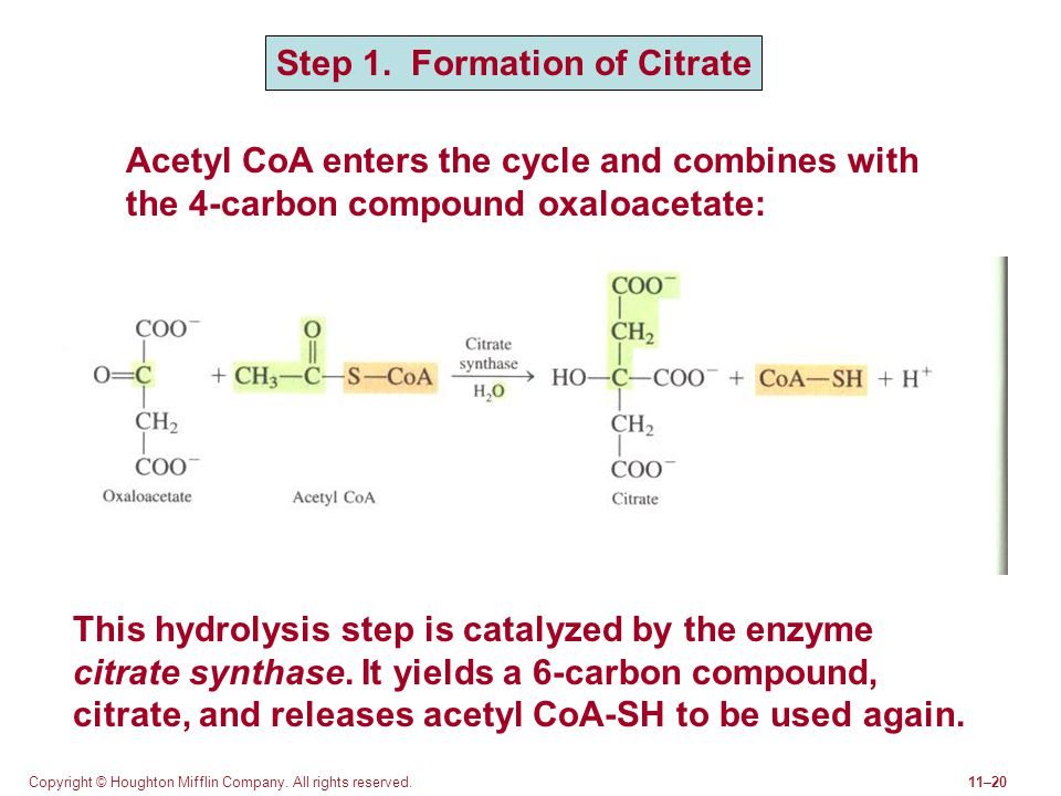 Step 1. Formation of Citrate