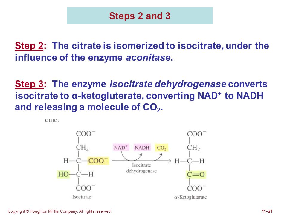 Steps 2 and 3 Step 2: The citrate is isomerized to isocitrate, under the influence of the enzyme aconitase.