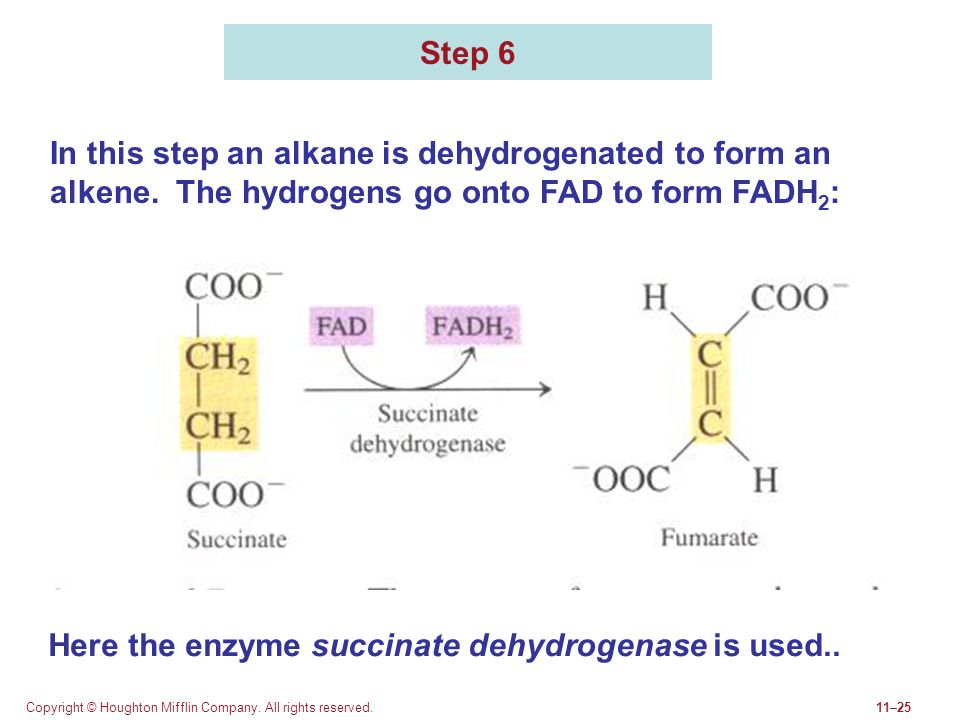 Here the enzyme succinate dehydrogenase is used..