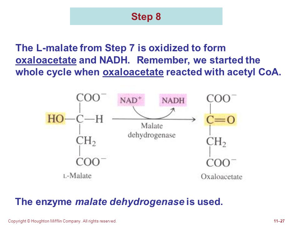 The enzyme malate dehydrogenase is used.