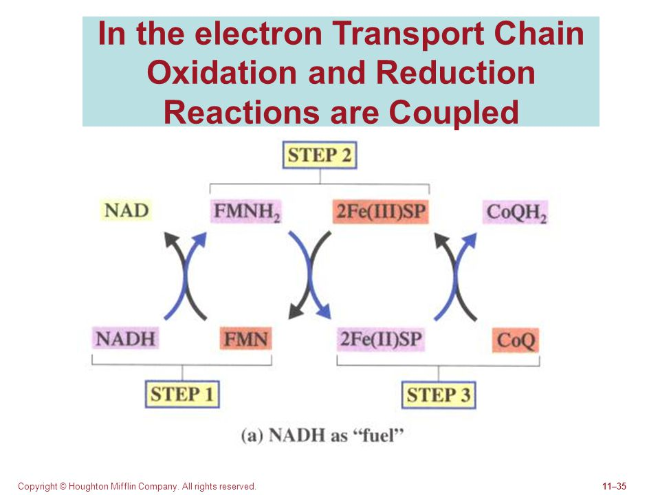 In the electron Transport Chain Oxidation and Reduction Reactions are Coupled