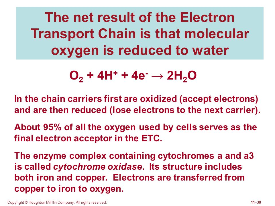 The net result of the Electron Transport Chain is that molecular oxygen is reduced to water