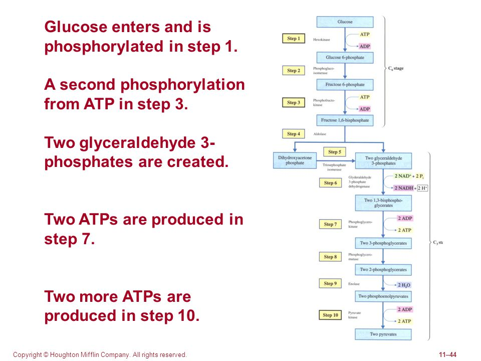 Glucose enters and is phosphorylated in step 1.