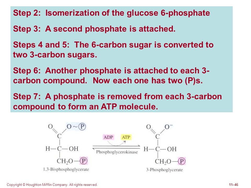 Step 2: Isomerization of the glucose 6-phosphate