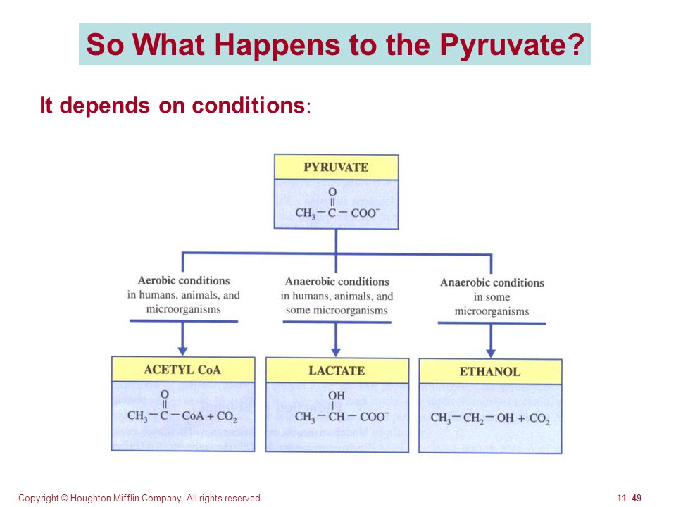 So What Happens to the Pyruvate
