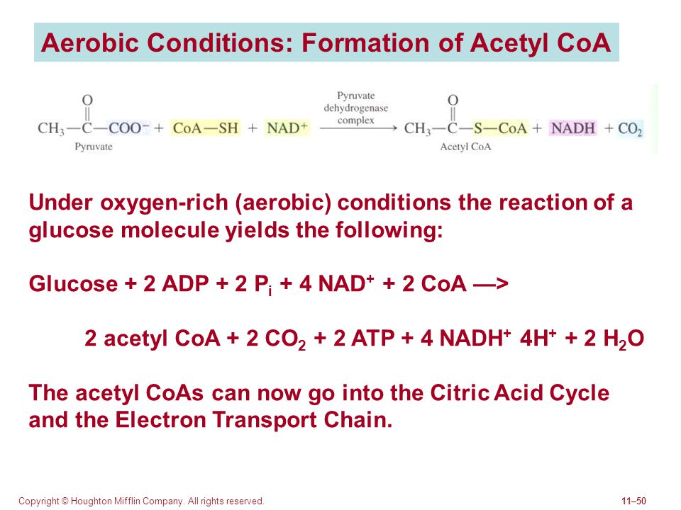 Aerobic Conditions: Formation of Acetyl CoA