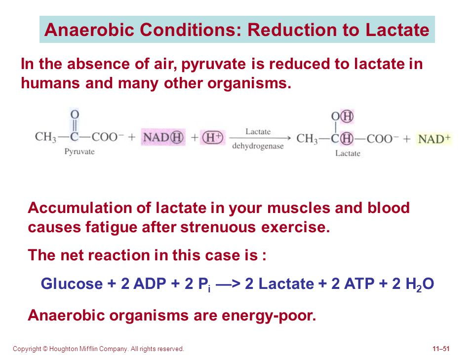 Anaerobic Conditions: Reduction to Lactate