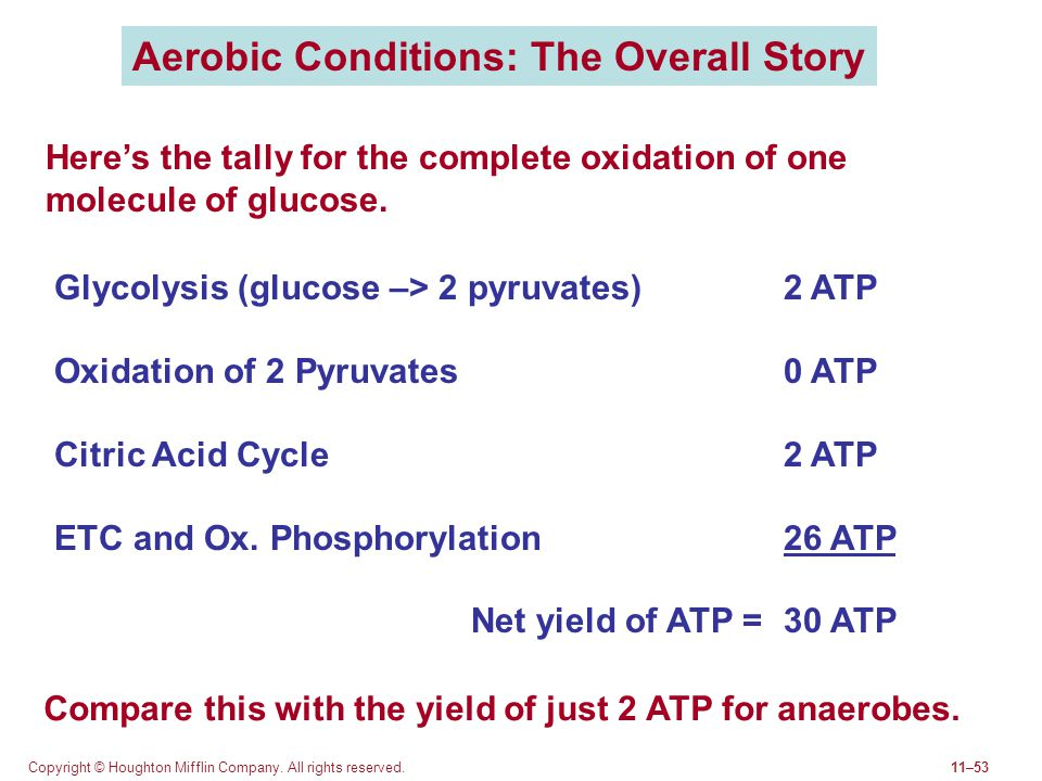 Aerobic Conditions: The Overall Story