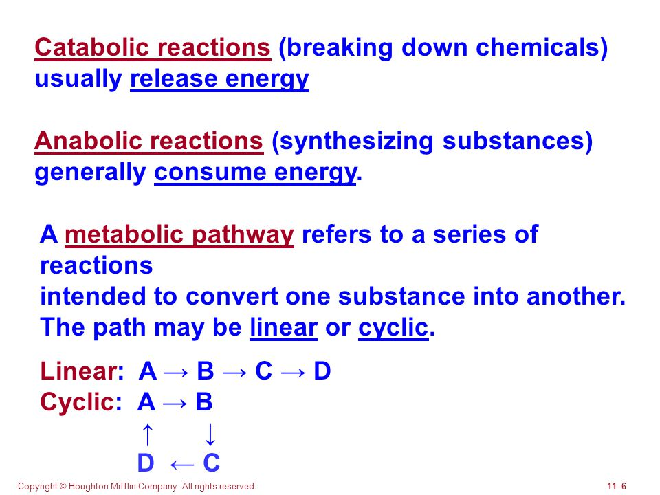 Catabolic reactions (breaking down chemicals) usually release energy
