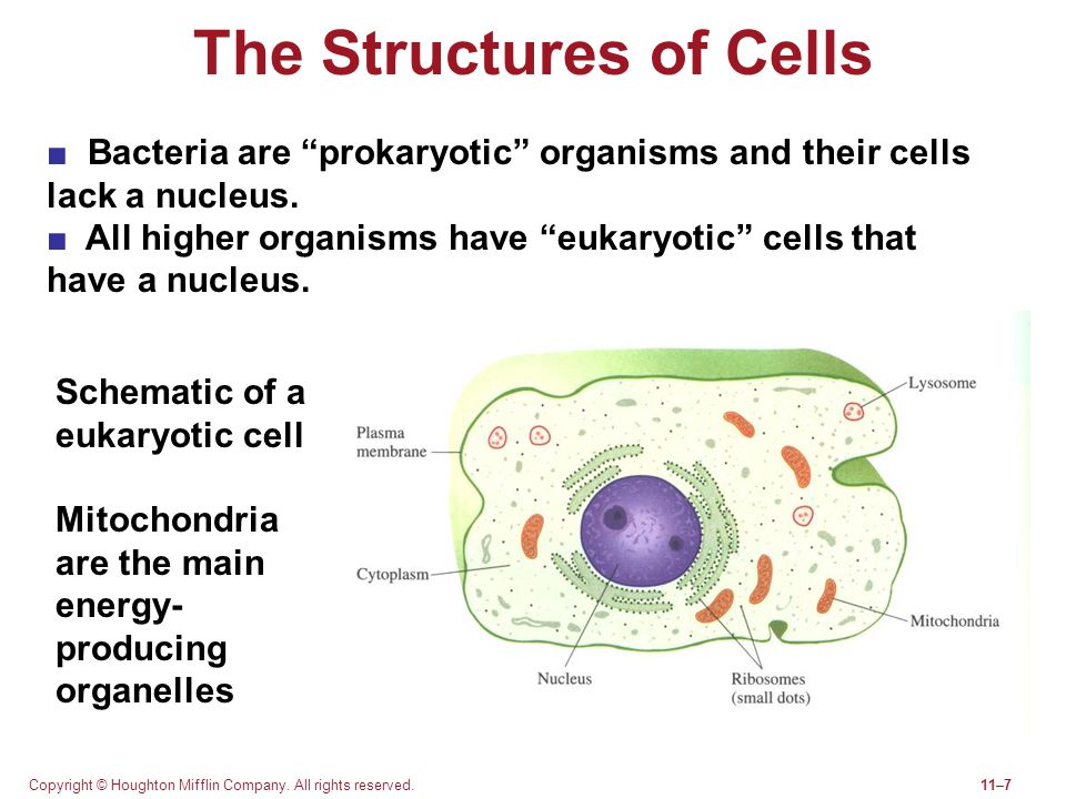 The Structures of Cells