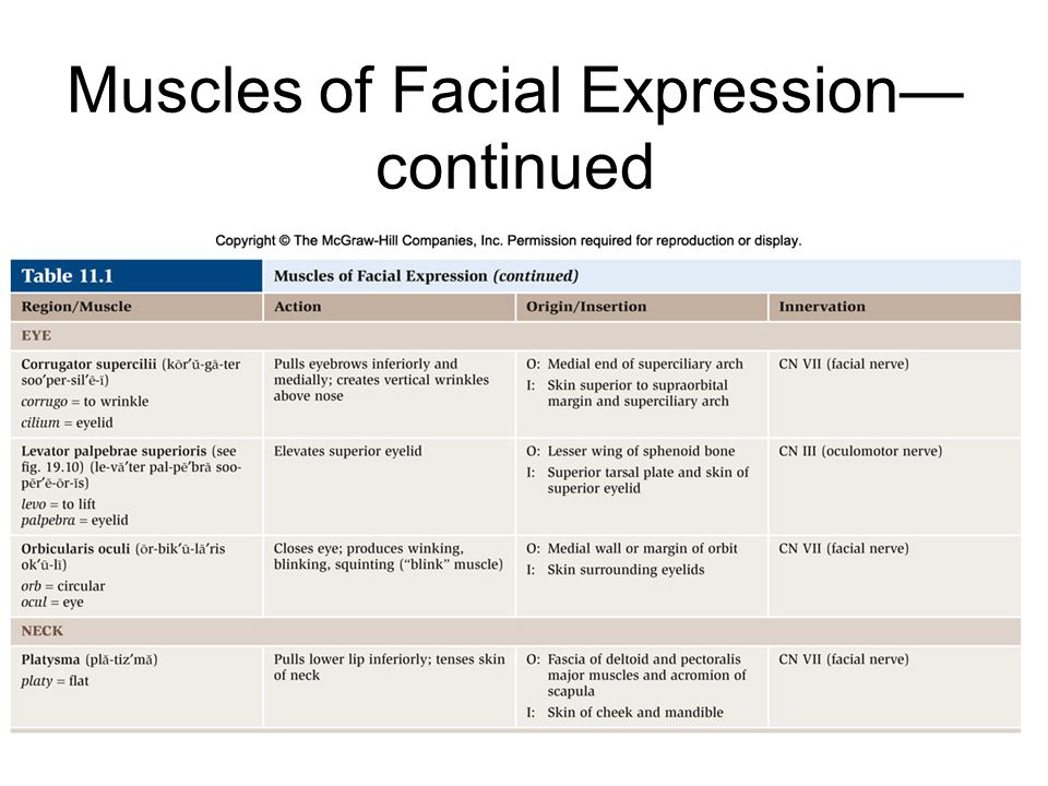 Muscles of Facial Expression—continued