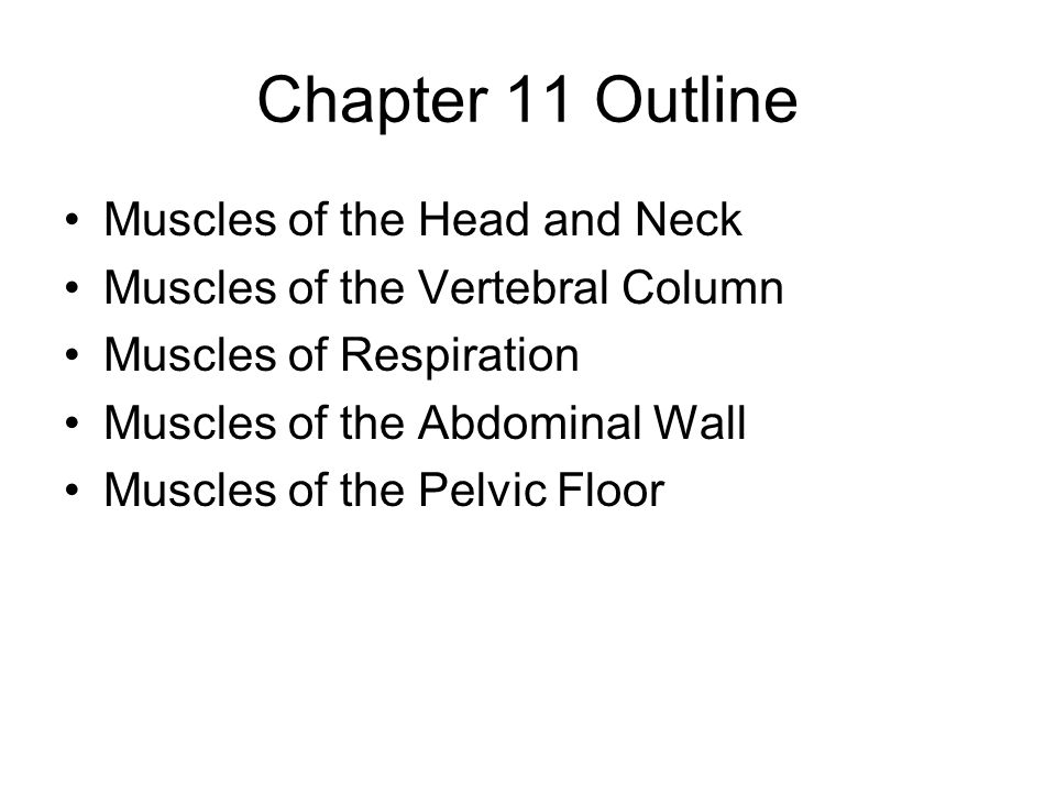 Chapter 11 Outline Muscles of the Head and Neck