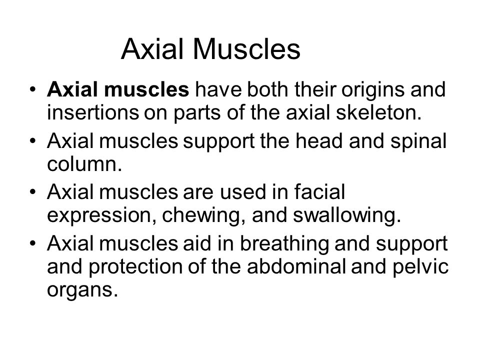 Axial Muscles Axial muscles have both their origins and insertions on parts of the axial skeleton. Axial muscles support the head and spinal column.