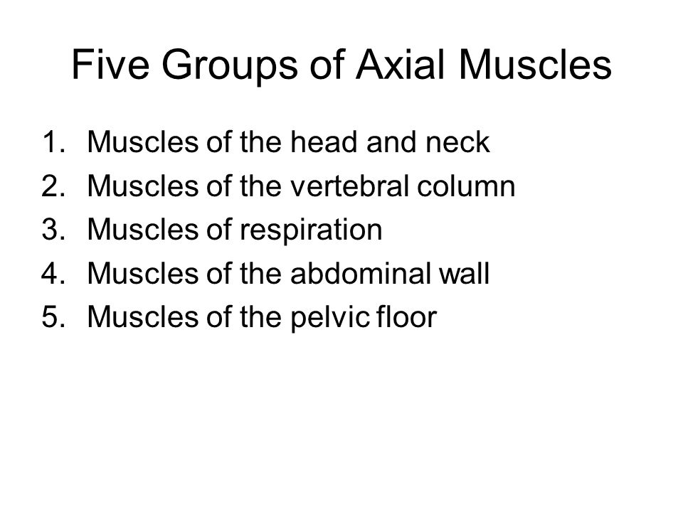 Five Groups of Axial Muscles