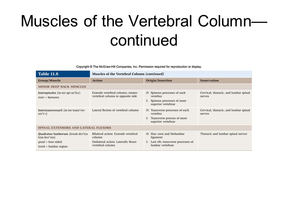 Muscles of the Vertebral Column—continued