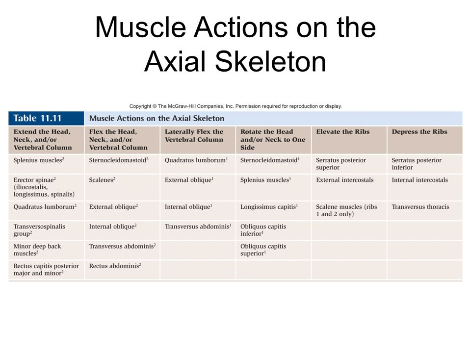 Muscle Actions on the Axial Skeleton