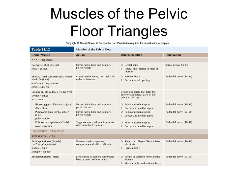 Muscles of the Pelvic Floor Triangles