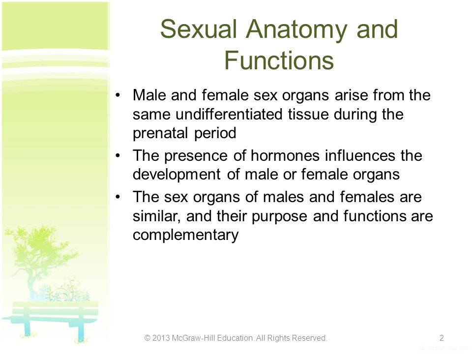 Sexual Anatomy and Functions