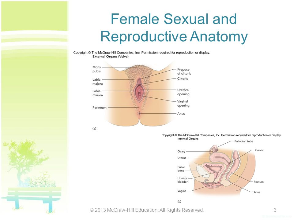 Female Sexual and Reproductive Anatomy