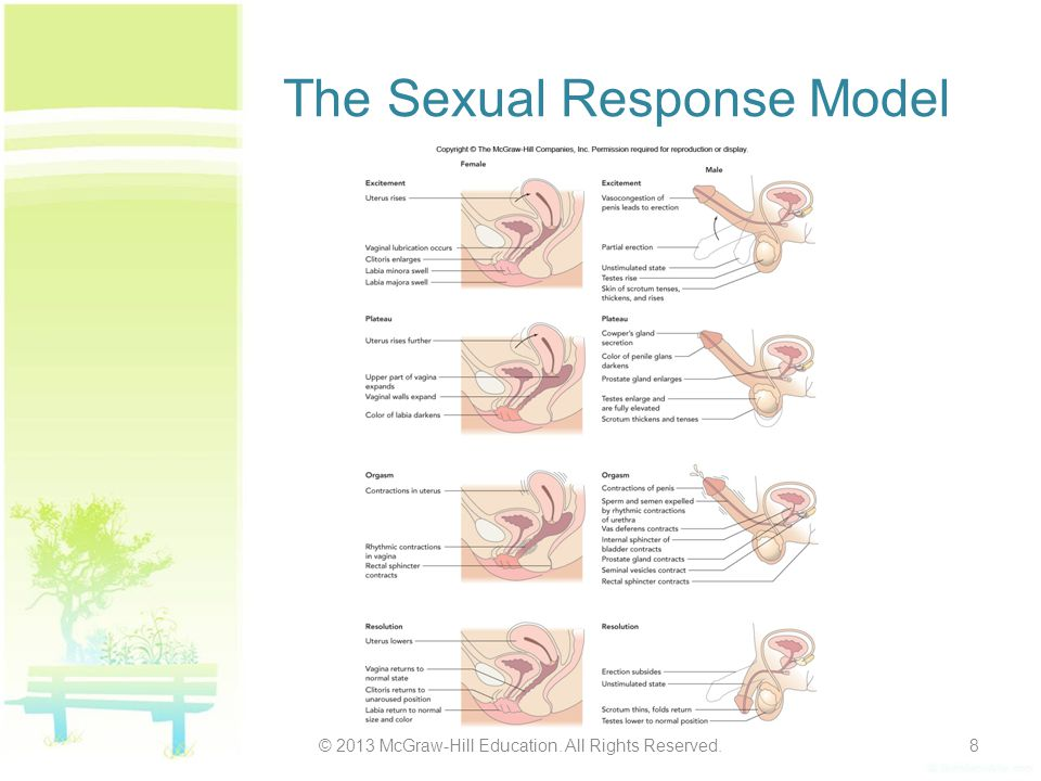 The Sexual Response Model