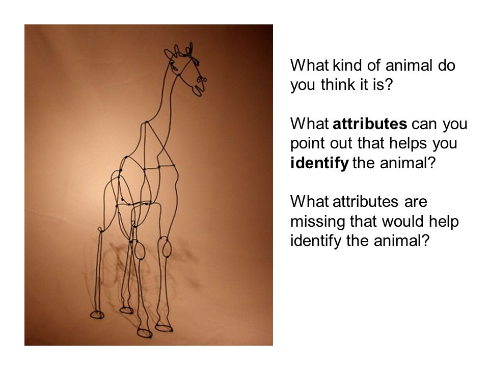 What kind of animal do you think it is What attributes can you. point out that helps you. identify the animal