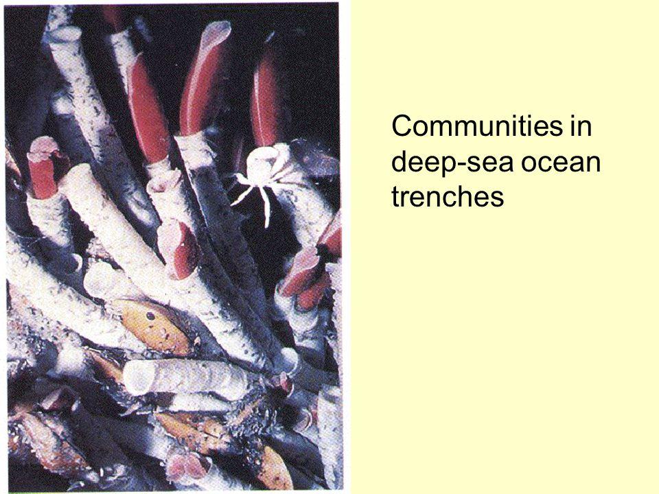 Communities in deep-sea ocean trenches