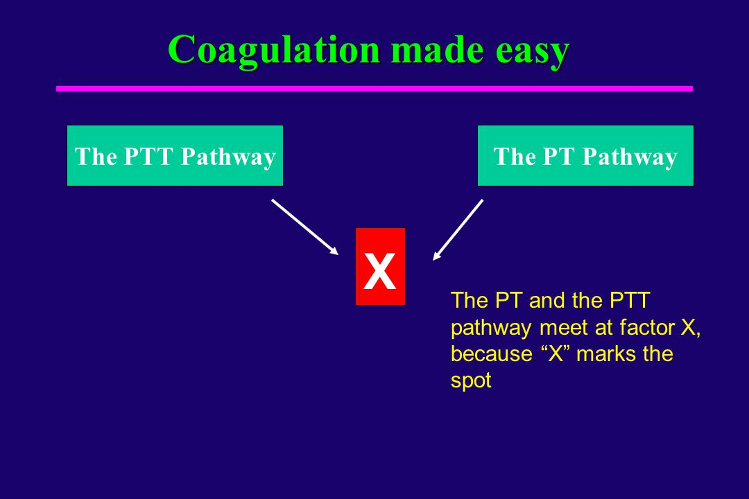 X Coagulation made easy The PTT Pathway The PT Pathway
