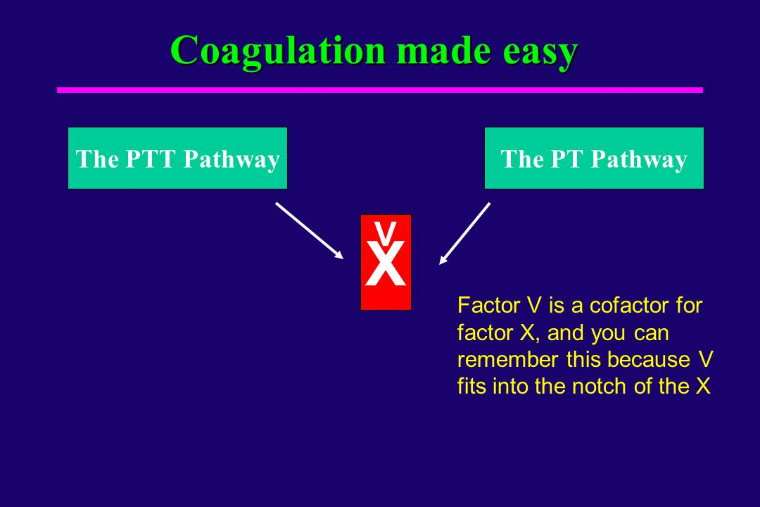 X Coagulation made easy V The PTT Pathway The PT Pathway