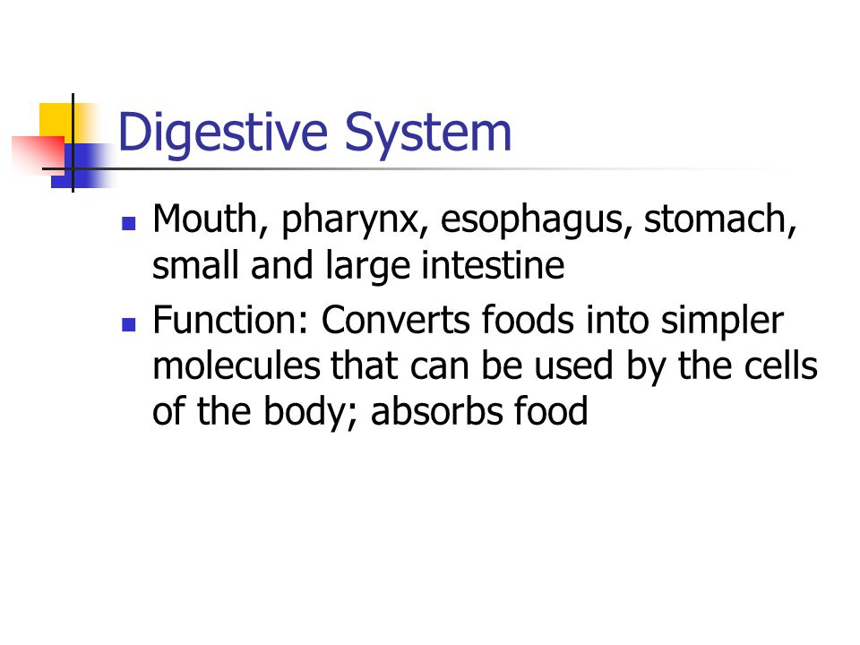 Digestive System Mouth, pharynx, esophagus, stomach, small and large intestine.