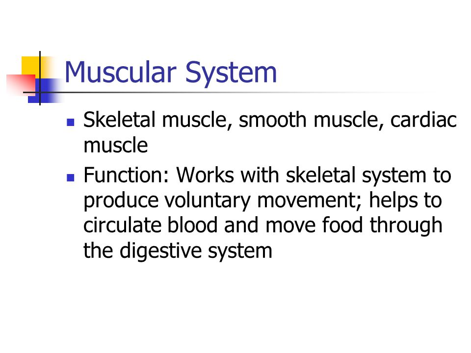 Muscular System Skeletal muscle, smooth muscle, cardiac muscle