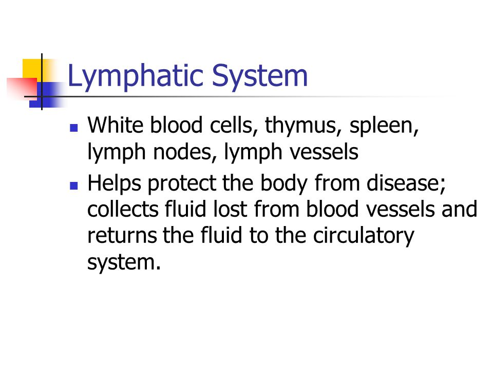Lymphatic System White blood cells, thymus, spleen, lymph nodes, lymph vessels.