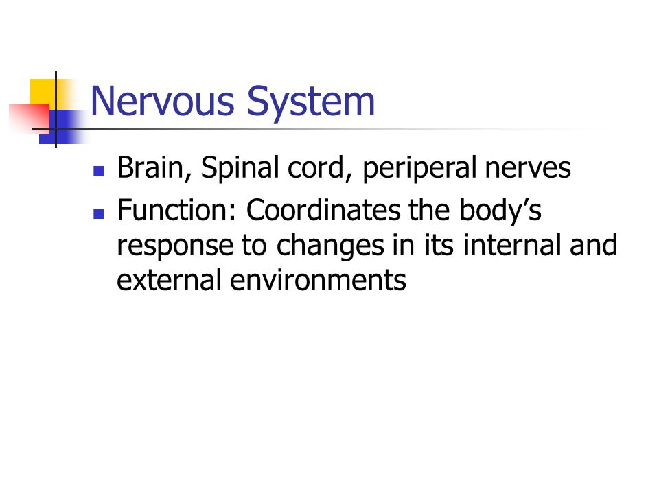 Nervous System Brain, Spinal cord, periperal nerves