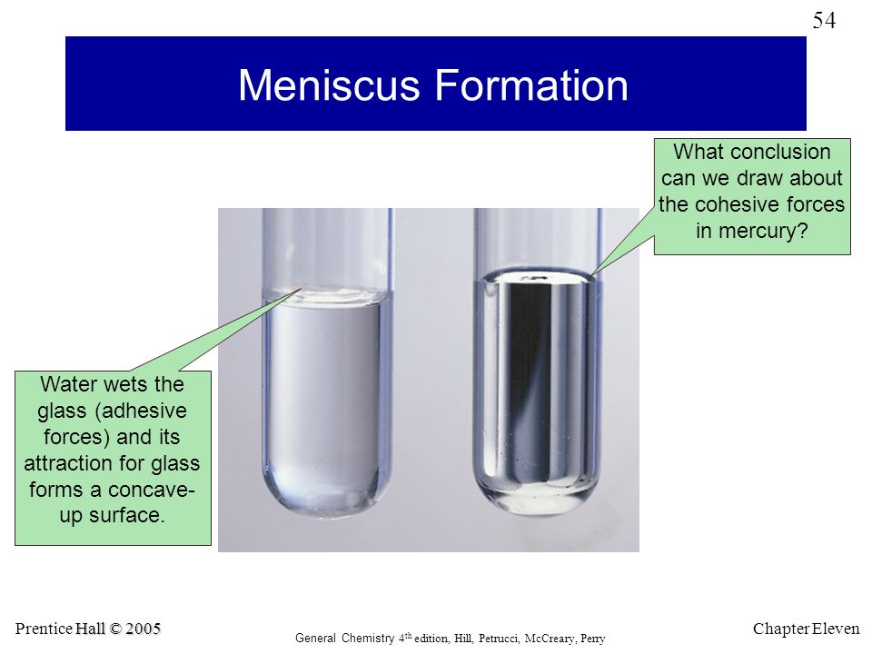 Meniscus Formation What conclusion can we draw about the cohesive forces in mercury