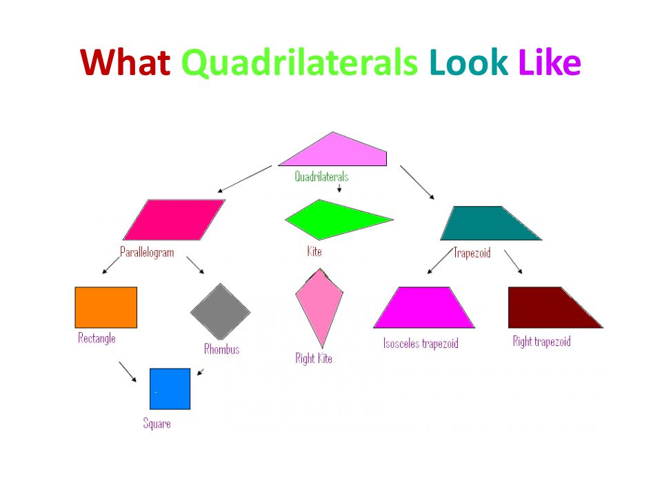 What Quadrilaterals Look Like
