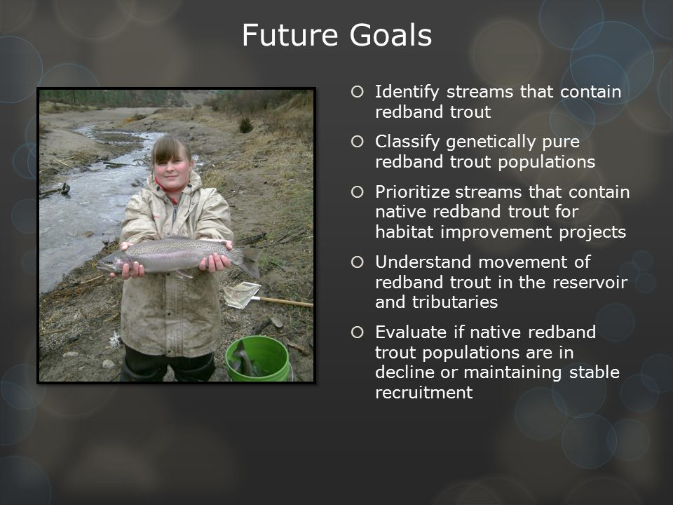 Future Goals Identify streams that contain redband trout