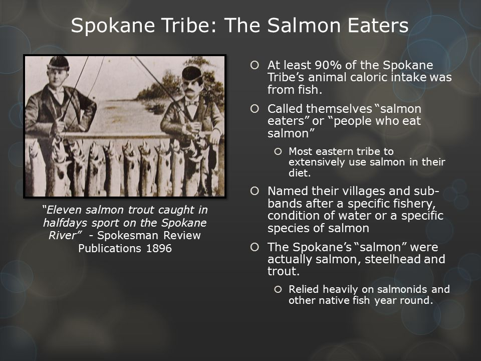 Spokane Tribe: The Salmon Eaters