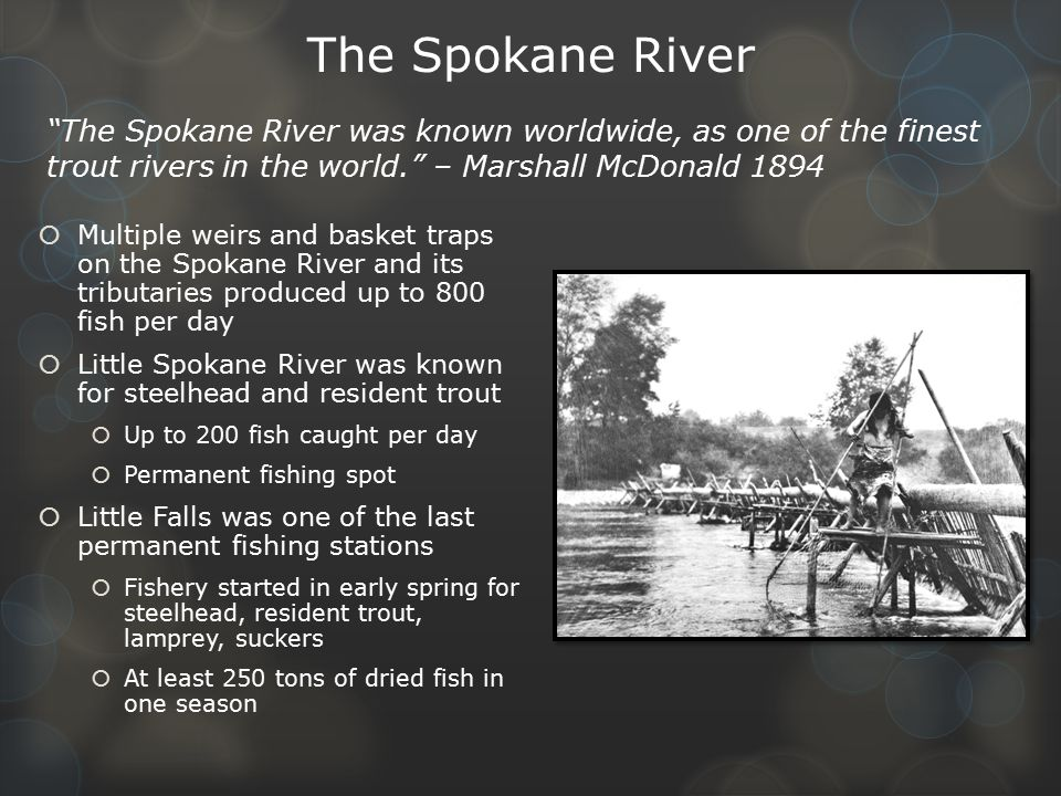 The Spokane River The Spokane River was known worldwide, as one of the finest trout rivers in the world. – Marshall McDonald 1894.