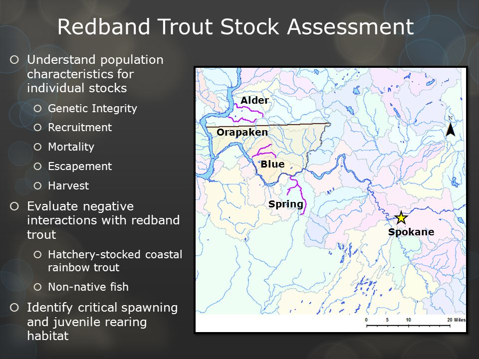 Redband Trout Stock Assessment